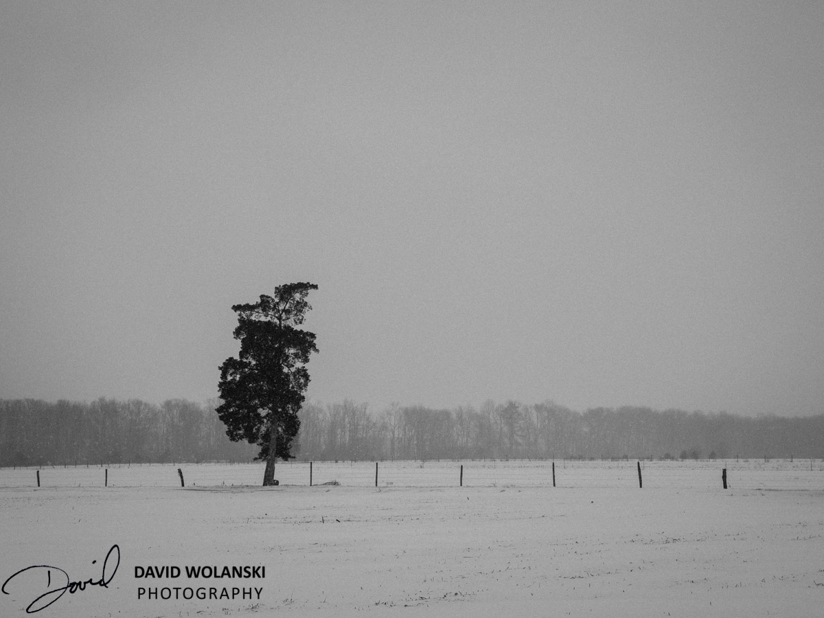 Always shoot lone trees!