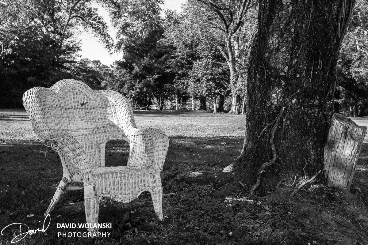Wicker Chair and Tree by a park
