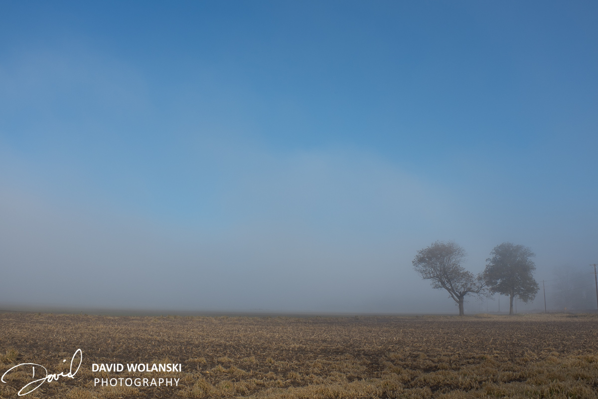 Two trees separated in the fog