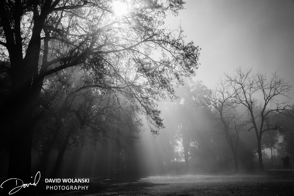 Mississippi delta fog and sunlight in trees