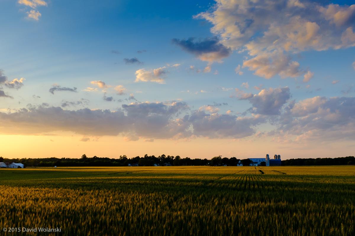 golden hour sunset on a wheat field