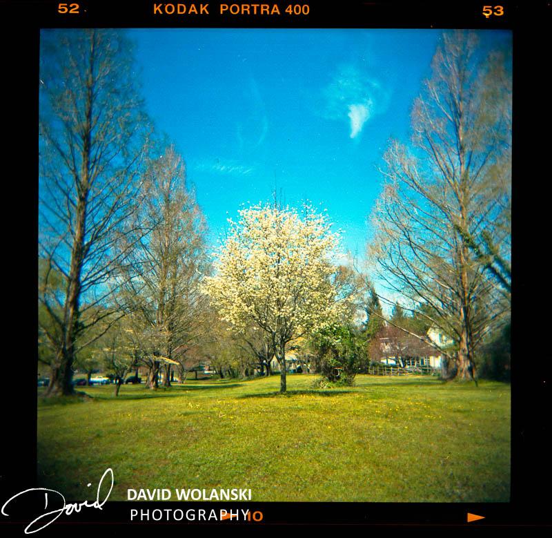 Tree in Park, Dover, DE