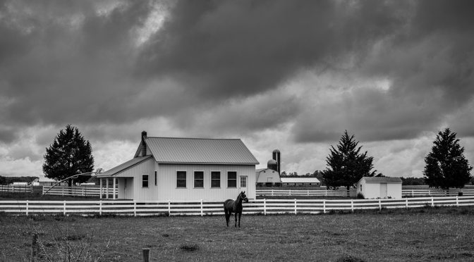 I hoped to get some dramatic sky, the horse was a bonus