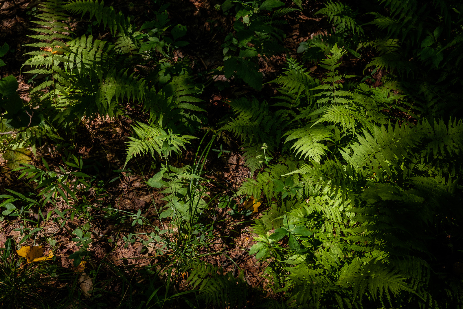 primordial ferns in dappled light