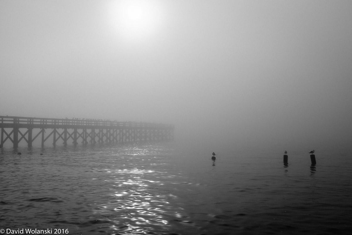 Sunlight through the fog looks like liquid silver on the water