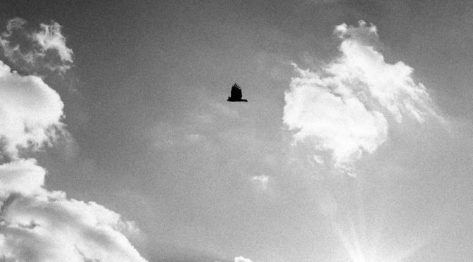 Vulture in Flight with clouds and sunburst